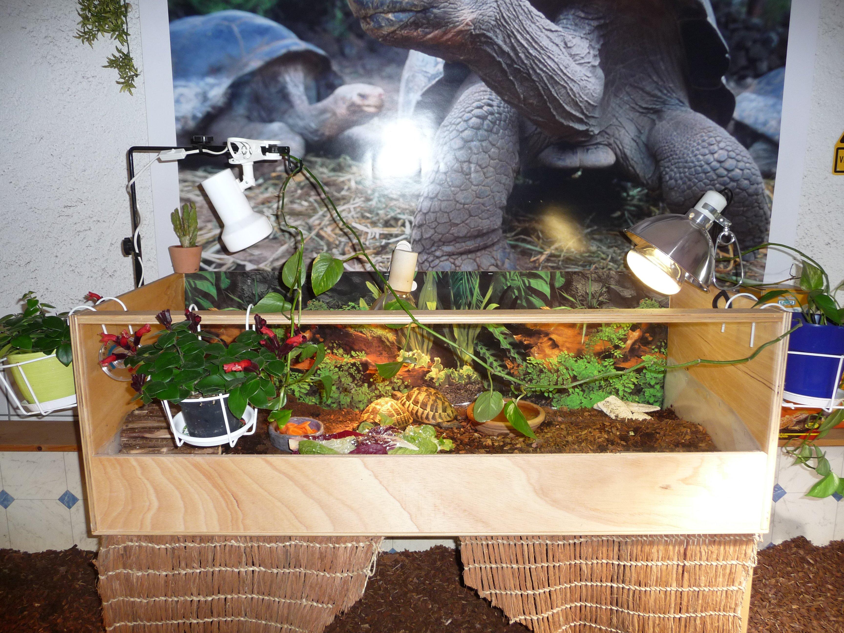 terratuga schildkr tenshop terratuga aufzucht landschildkr ten terrarium gr e 100x47x40 cm. Black Bedroom Furniture Sets. Home Design Ideas